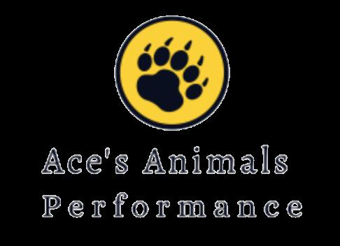 Ace's Animals Performance
